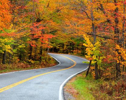 Fall Foliage along a road