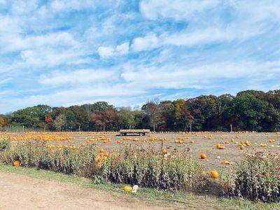 Gaver Farm Pumpkin Patch