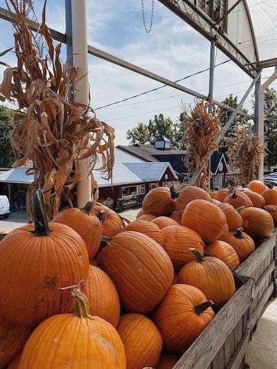 Weber's Farm Pumpkins